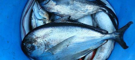 04/08/17 - Polyarthrite rhumatoïde : les bienfaits du poisson