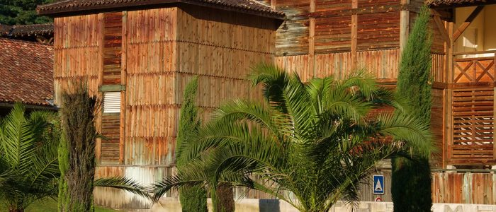 Cure thermale Barbotan-les-Thermes - Le parc des thermes avec ses palmiers
